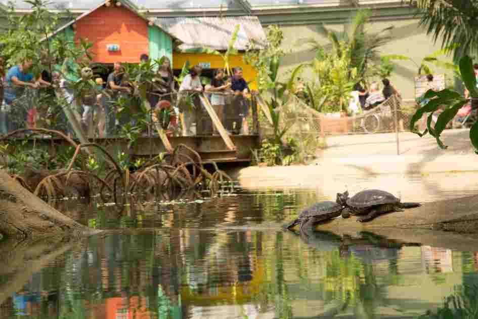 Burgers' Mangrove in Burgers' Zoo